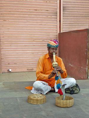 7530141-Snake_charmer_Jaipur.jpg