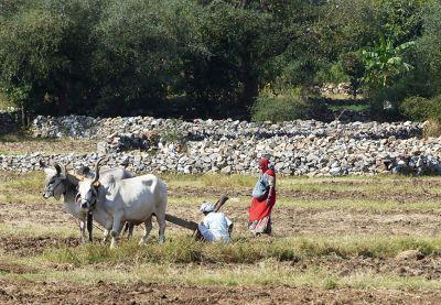 7553658-Ploughing_Udaipur.jpg
