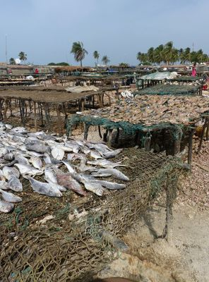 7577766-Fish_drying_tables_Djifere.jpg