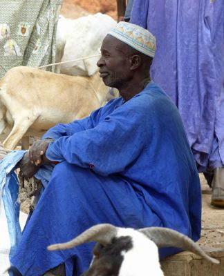 7578278-The_animal_market_Ngueniene.jpg
