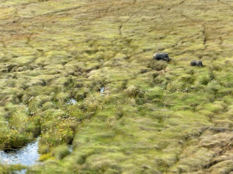 Flying over the Okavango Delta - elephants