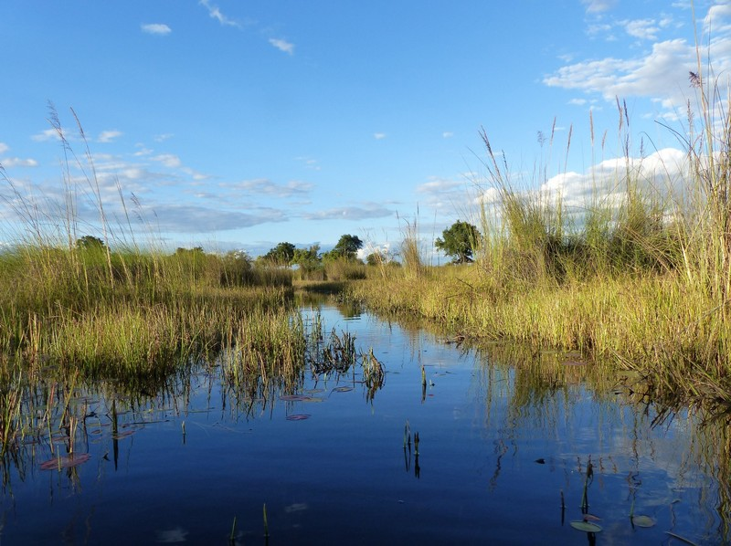 Typical channel in the Okavango Delta