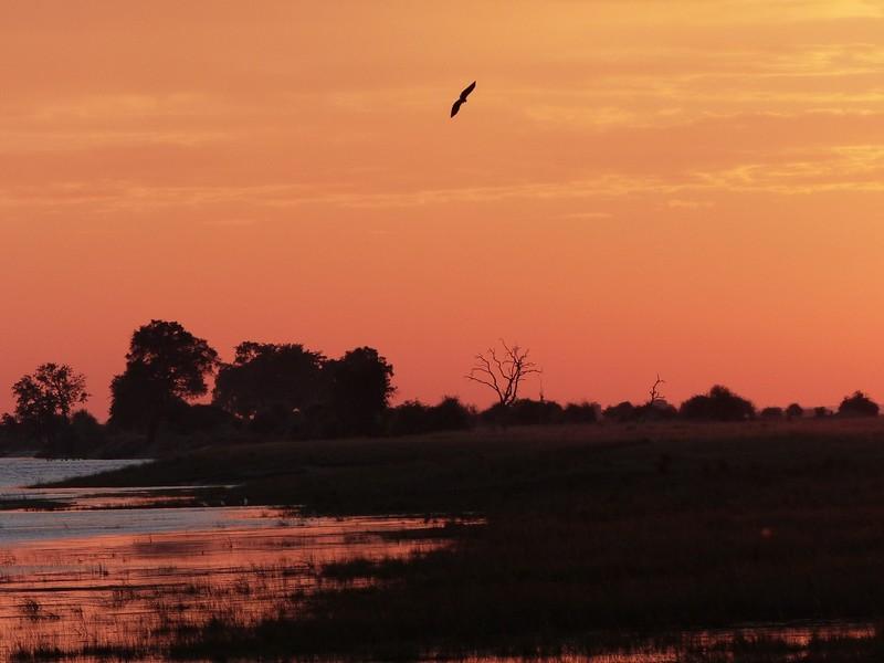 Chobe River sunrise