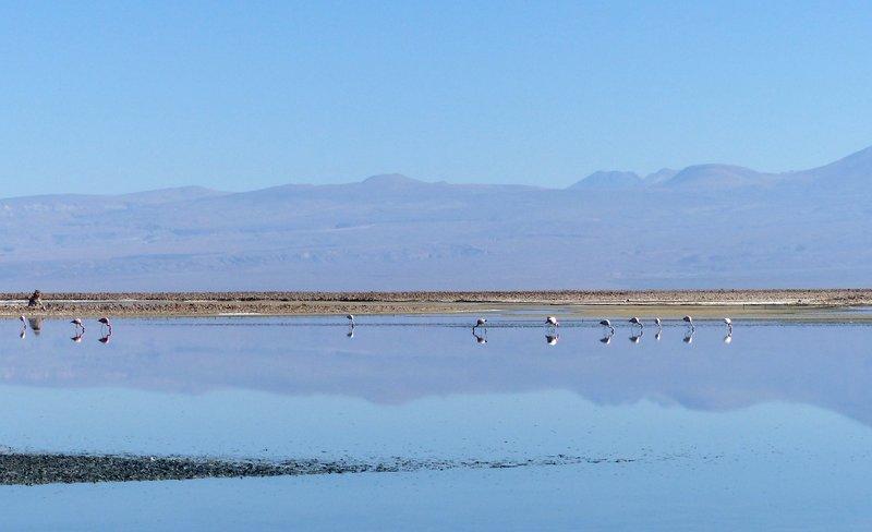 large_4_21_Ataca.._de_Atacama.jpg