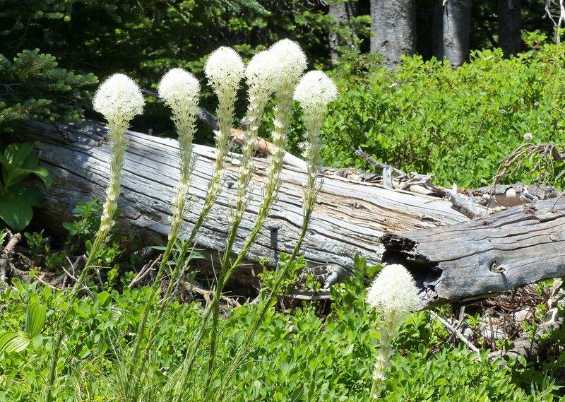 On the Myrtle Falls trail, Mount Rainier NP