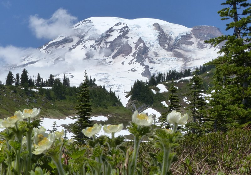 On the Myrtle Falls trail, Mount Rainier NP