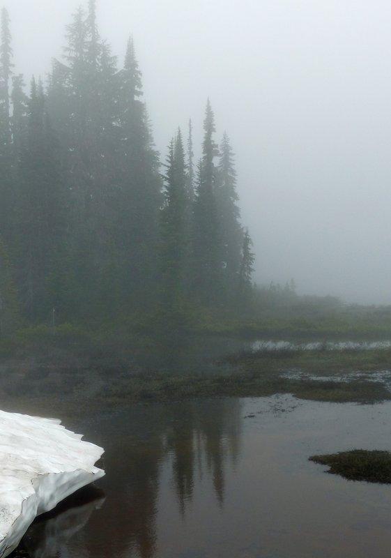 Fog near Reflection Lakes, Mount Rainier NP
