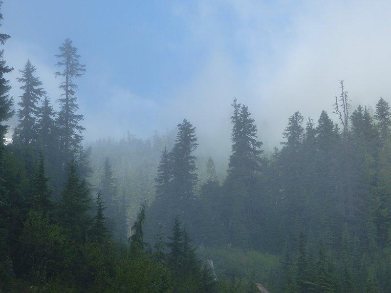 Misty morning, Sunbeam Creek, Mount Rainier NP