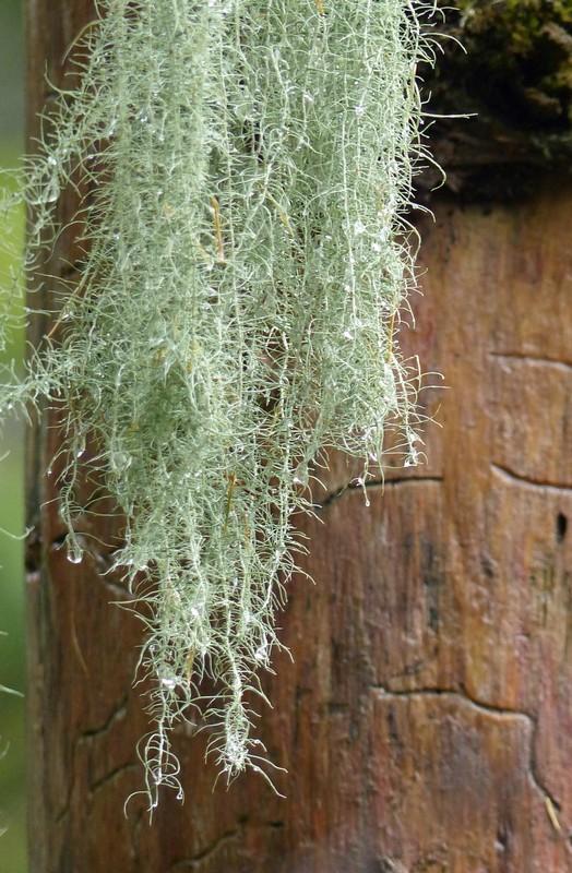 Tree and moss, Kamikochi
