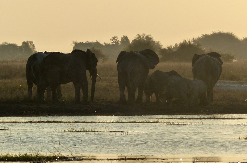 Elephants at sunset, Chobe National Park