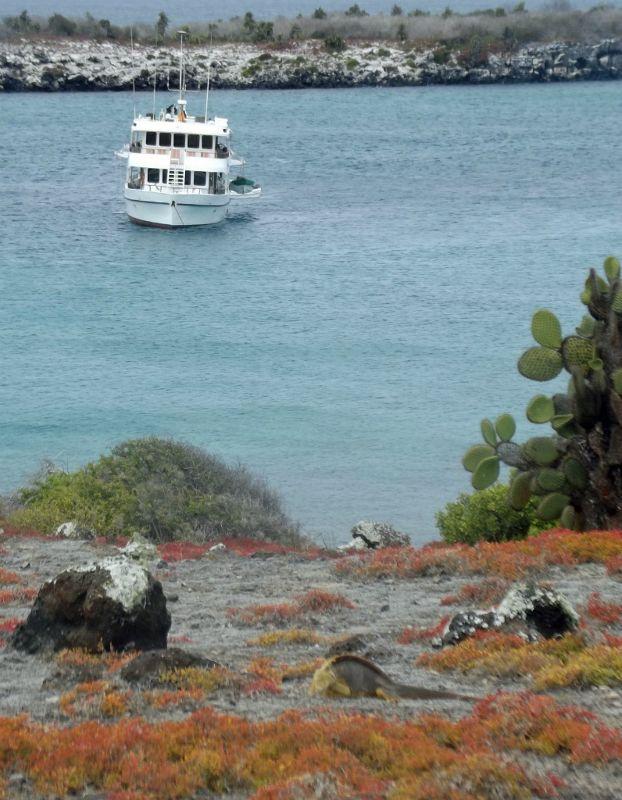 Angelito with Land iguana - Isla Plaza Sur