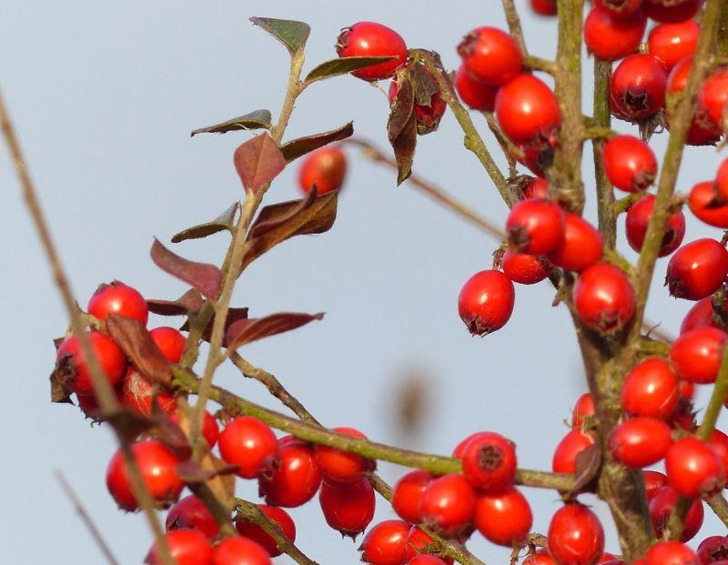 large_588760337287078-Winter_berri..uridge_Bay.jpg