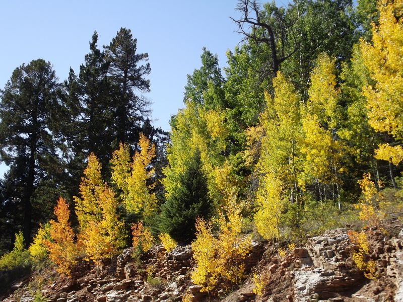 large_5918130-Aspens_on_Crest_Road_Albuquerque.jpg