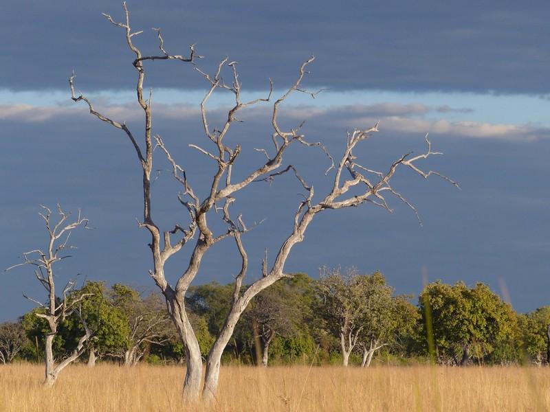 Landscape of Sausage Island, Okavango Delta
