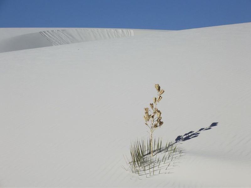 large_6063194-_White_Sands_National_Monument.jpg