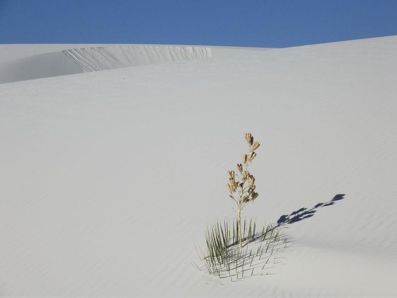 large_6063194-_White_Sands_National_Monument.jpg