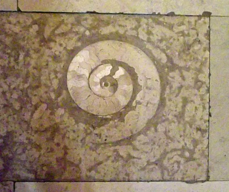 Fossil in the floor - Ancona