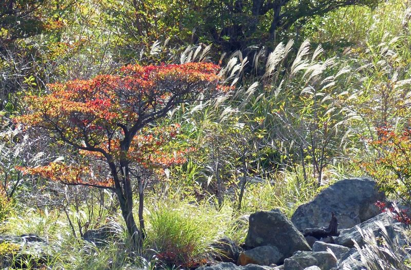 large_6892898-Owakudani_Hot_Springs_Hakone.jpg