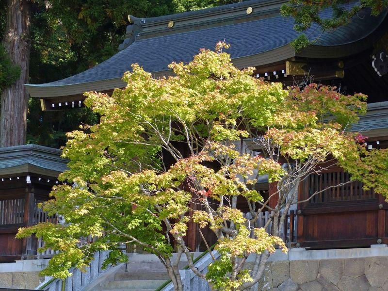 large_6927664-Sakurayama_Hachimangu_Takayama.jpg
