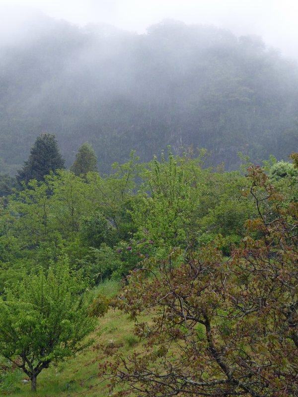 Scenery near Peulla