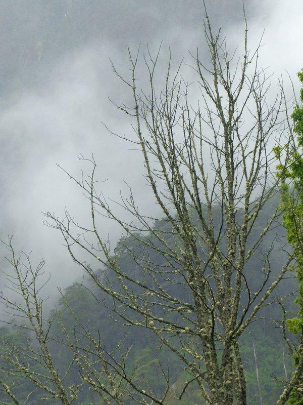 Mountain scenery near Peulla