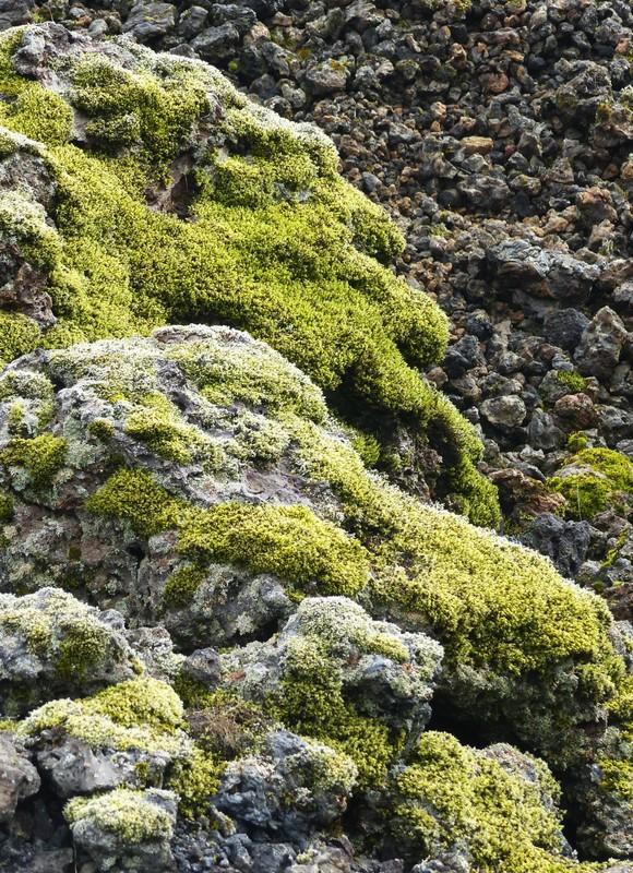 Mossy rocks, Saxholar