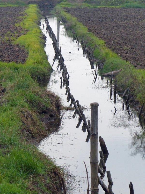 Paddy field, Kerala backwaters