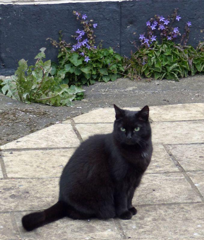 Cat in Tynemouth