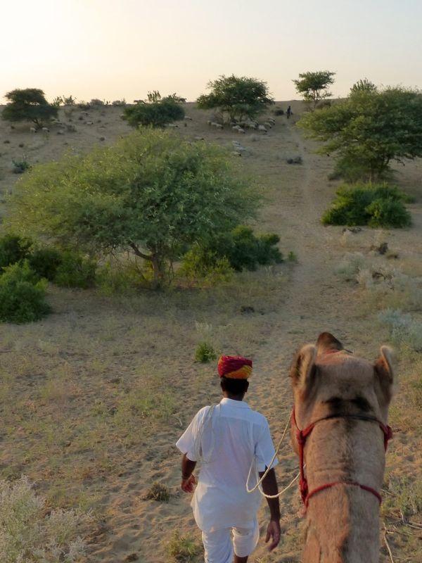 Camel ride - Dechu