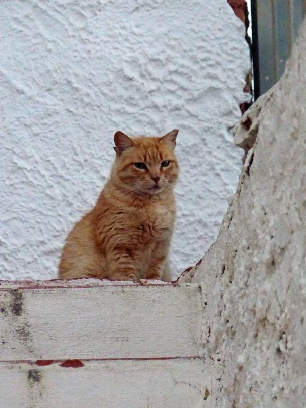 Cats' Colony - Albufeira