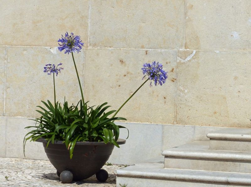 By the church entrance - Albufeira