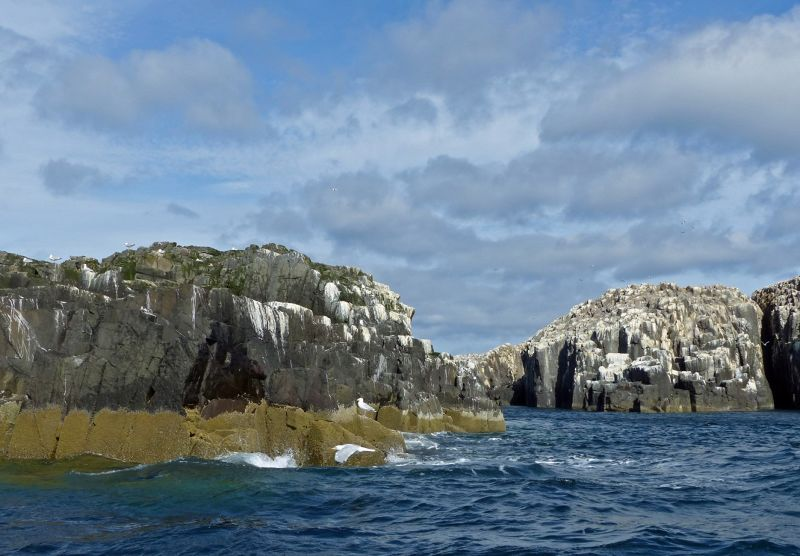 large_7670451-Staple_Island_and_the_Pinnacles_.jpg