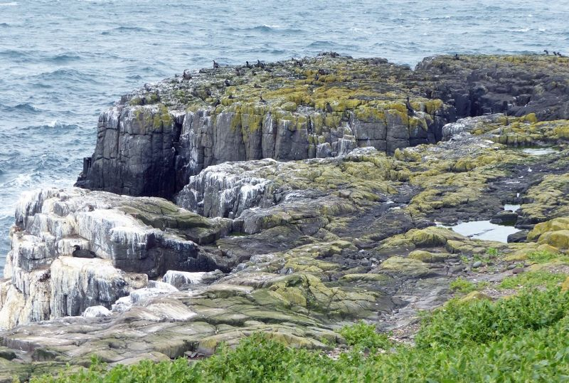 large_7670484-Inner_Farne_on_the_cliffs.jpg