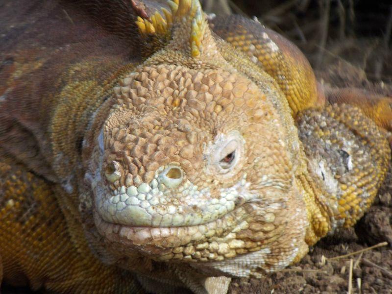 large_817900526444294-A_Galapagos_..os_Islands.jpg