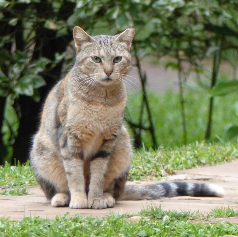Cat at the Karen Blixen Coffee Gardens