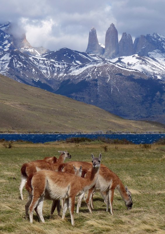 9 118 Torres del Paine 2016 At Laguna Azul