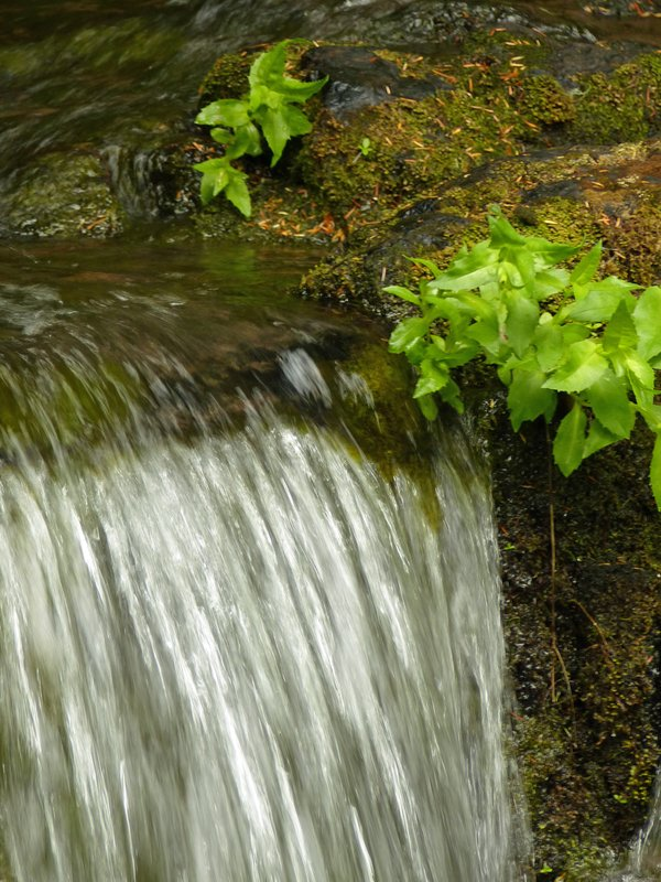 Falls Creek, Mount Rainier NP