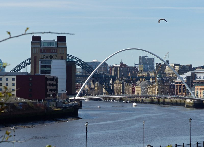 large_Newcastle_00016_.jpg