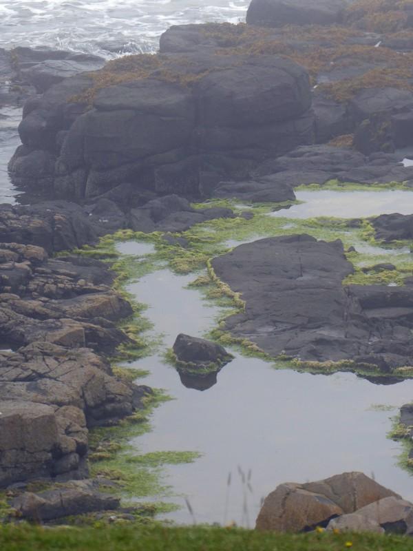 Coast near Craster, Northumberland