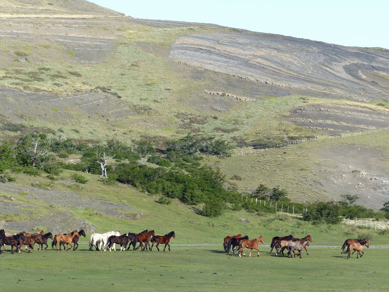 Horses at Las Torres Hotel