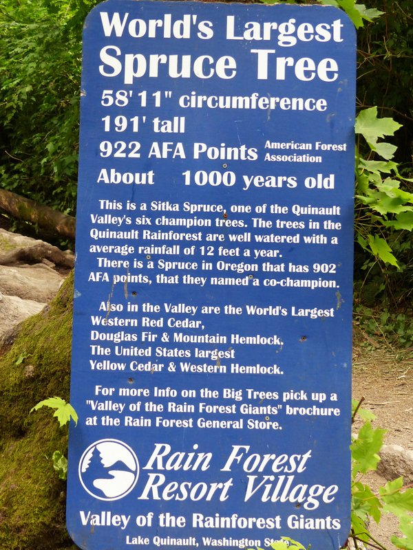 Sign at the Big Spruce Tree, Lake Quinault