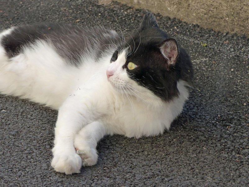 A friendly cat in Arpino
