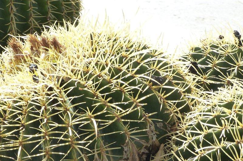 Cacti, Praça Alexandre Albuquerque