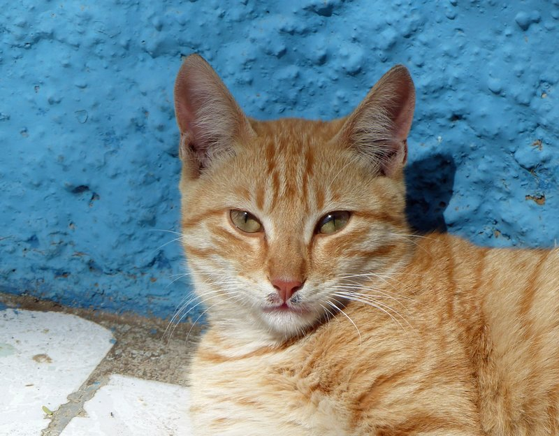 Friendly cat, Gamboa, Praia