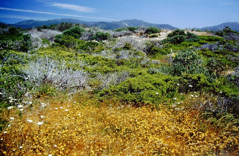 Dunes at Año Nuevo State Reserve