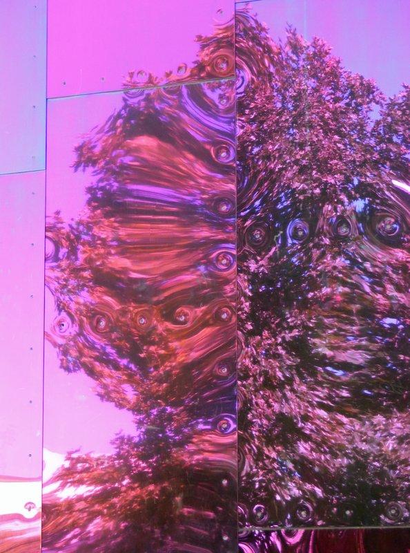 Tree reflection, MoPop, Seattle