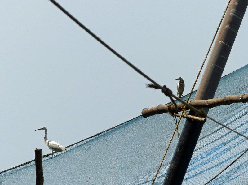 Chinese fishing net, Fort Cochin