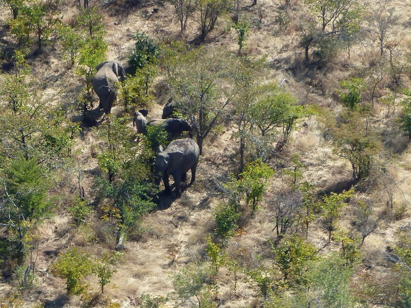Helicopter flight above Victoria Falls - elephants in the national park