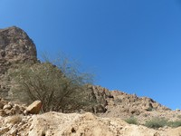 From the road through Wadi Tiwi
