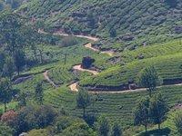 Tea plantation near Munnar